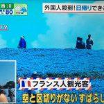 あさチャン 外国人殺到 日帰りできる 日本の絶景 あしかがフラワーパーク 富士芝桜 ひたち海浜公園