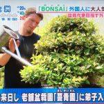 あさチャン 外国人に大人気の『盆栽 BONSAI』その理由とは?