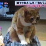 あさチャン 九州ふっこう割で猫が癒してくれる宿へ『ふみふみの間』とは?